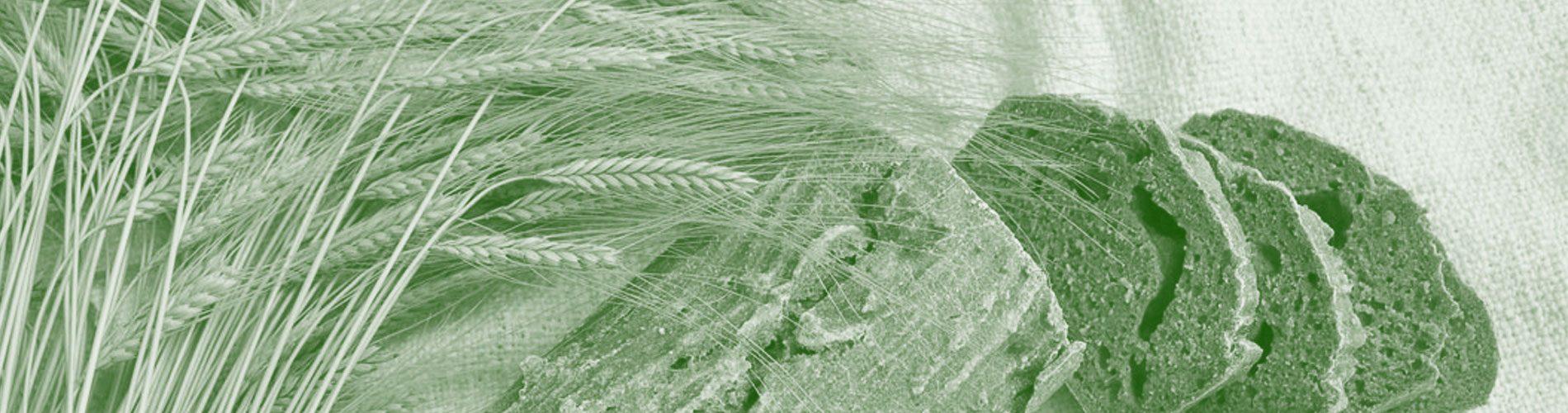 Cabecera Web